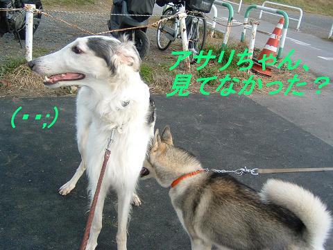 ハスキーのルフィーちゃん (6)p0010