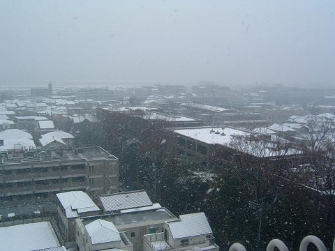 雪とアレックス 0020001