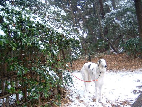 雪とアレックス 0210008