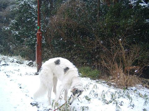 雪とアレックス 0340006