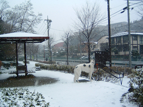雪とアレックス 0350005