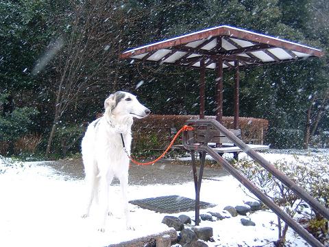 雪とアレックス 0380004