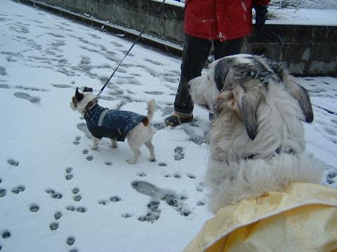 雪と節分 0120001