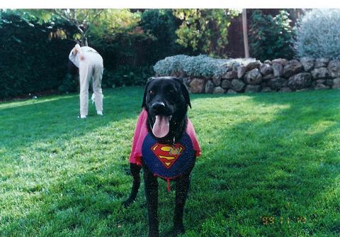 jack,superman0001.jpg