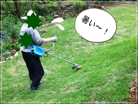 blg13shibakari0705F4850.jpg