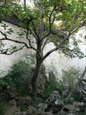 071021-tree.jpg
