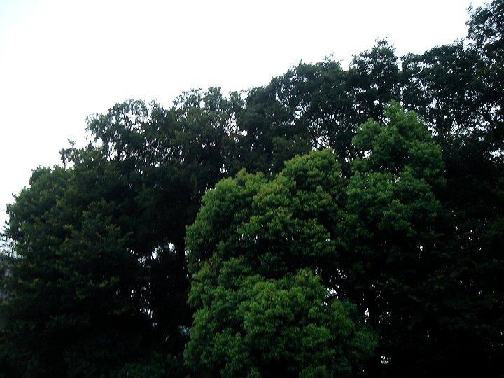 060813-2.jpg