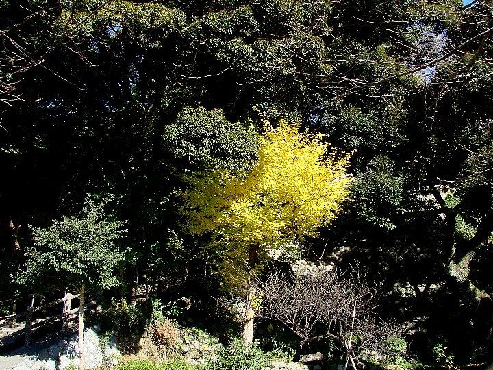 20061213-2.jpg