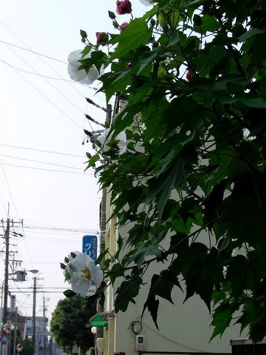 20070913-1.jpg