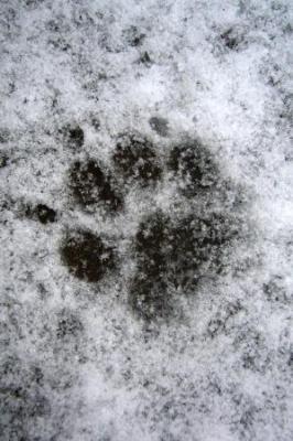 snow3.jpg