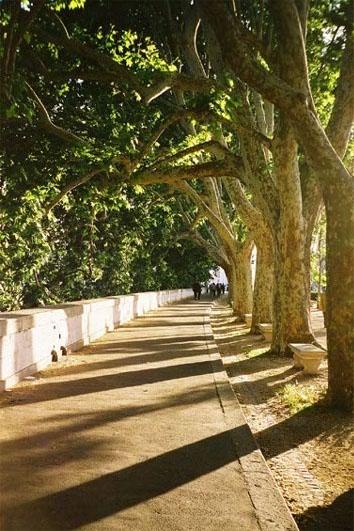 ローマ朝の散歩2