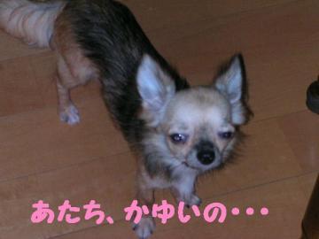 DSCN2481.jpg