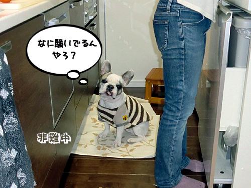 キッチンで・・・