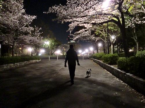 夜桜もいいネ!