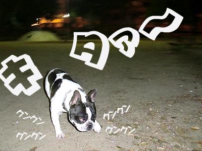 警察犬か?