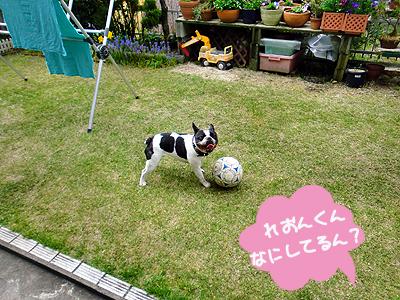 お庭でボール遊び中♪