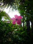 チャンプハンホテル(庭の花1)