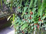 チャンプハンホテル(庭の花2)
