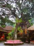 バリの王宮の樹(写真)