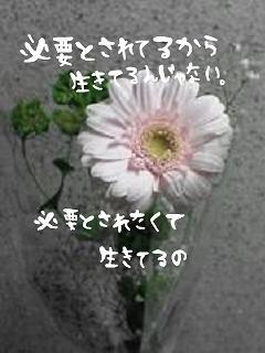 20070602232214.jpeg