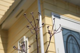 2008我が家の花 2