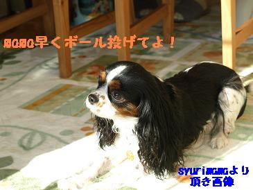 2007/12/30 その3頂き画像