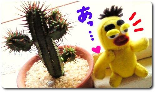 お花が咲きますように。。4☆