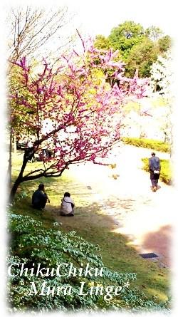 桜が咲いたよ7☆