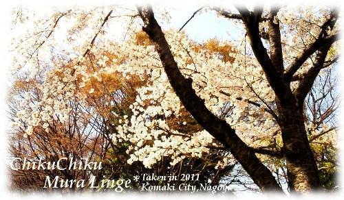 桜が咲いたよ3☆