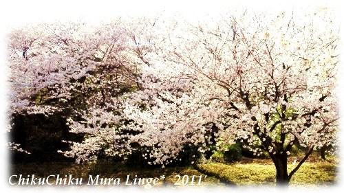 桜が咲いたよ4☆