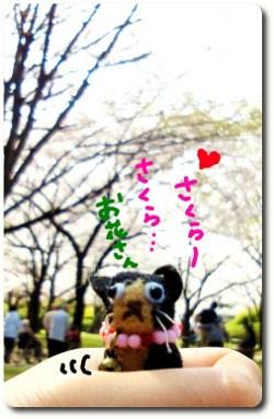 桜が咲いたよ2☆