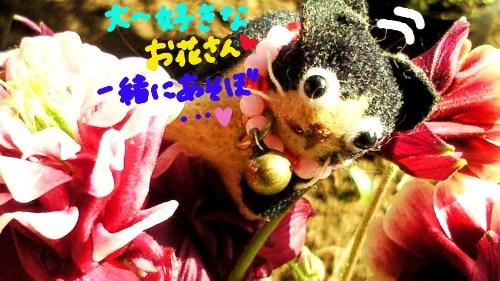お花の植え変え3☆