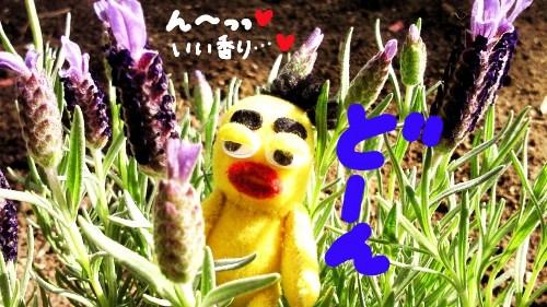 お花の植え変え4☆