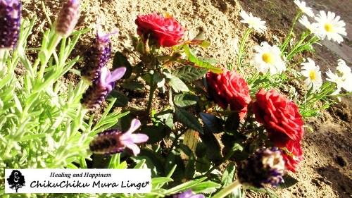 お花の植え変え7☆