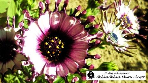 お花の植え変え6☆