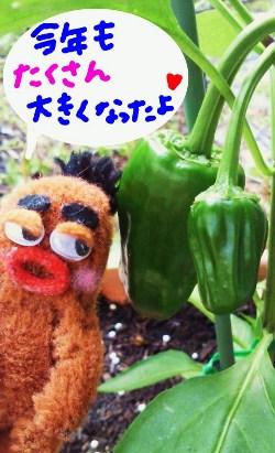 2011年ピーマン2☆