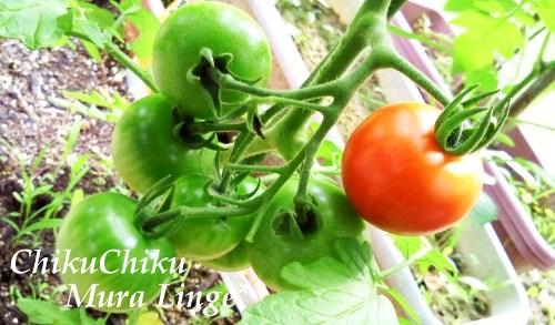 夏の収穫祭19☆