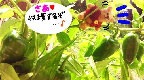 夏の収穫祭18☆