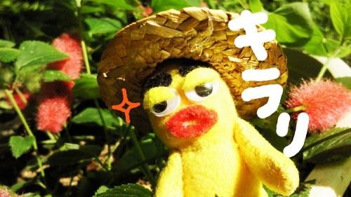 夏の収穫祭5☆
