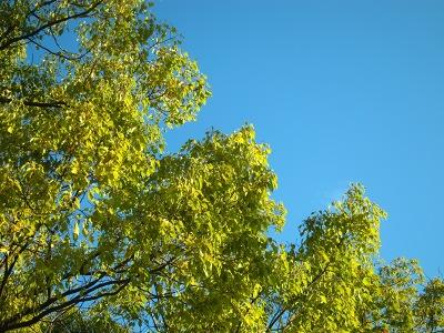 20110304_空と緑