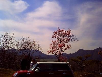 20110305_梅にジョン6-v