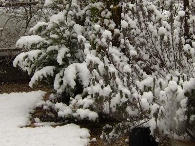 20110316_雪の朝