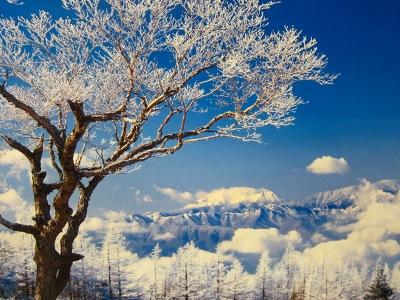 20110201_雪景色