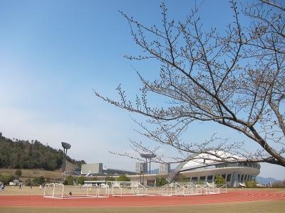 20110331_サッカーと桜の蕾