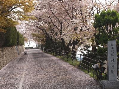 20110417_桜散る