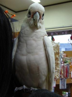 20110528_くーちゃん