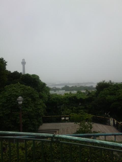 丘からの港