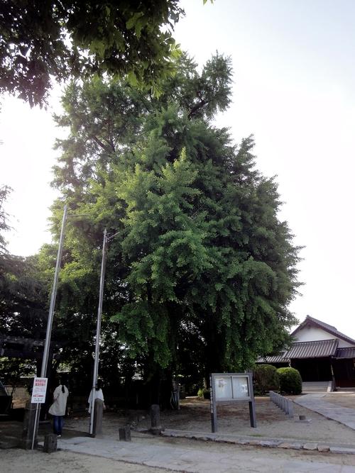 230521 浄業寺跡4