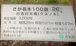 230806 川古の大楠3-2