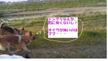 20071016205635.jpg